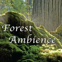 Forest Ambience Album Nature Sounds